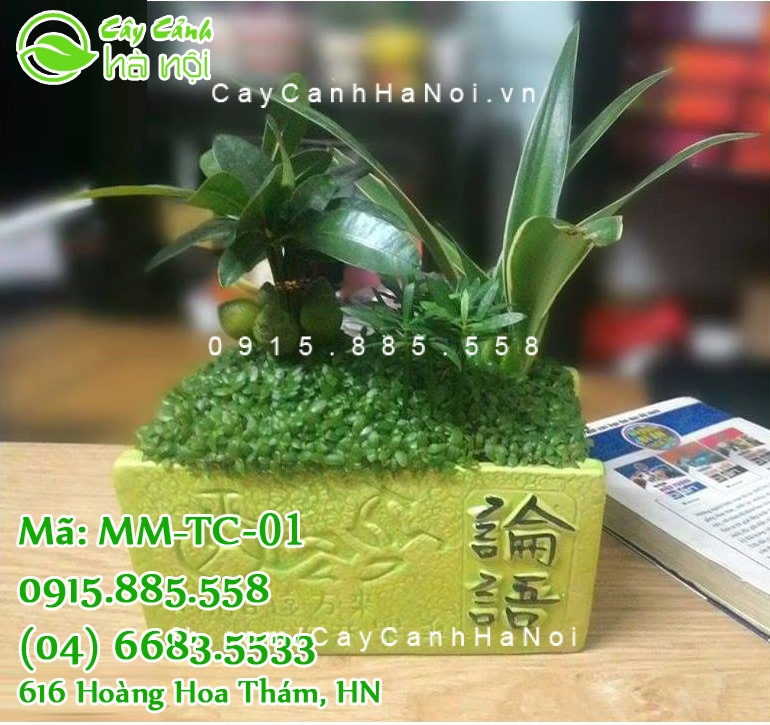 Cay-tai-loc Những loại cây phong thủy trồng trong nhà mang lại tài lộc, may mắn