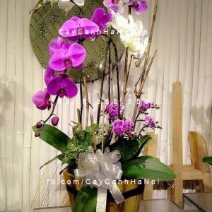 Hoa lan hồ điêp