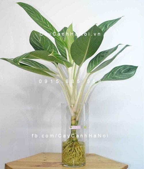 cay-thuy-canh-1-500x375 Top 3 cây thủy canh được ưa chuộng nhất và cách chăm sóc phù hợp